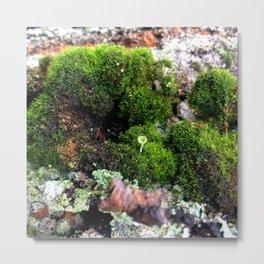 Moss Anemone Metal Print