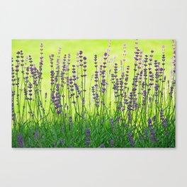 Lavender Pattern Canvas Print