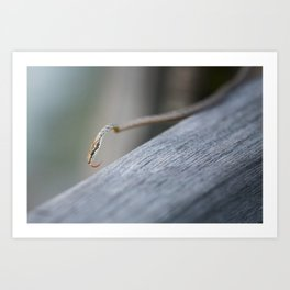 Snake at Bako National Park, Borneo Art Print