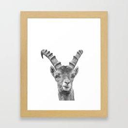 Black and white capricorn animal portrait Framed Art Print