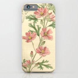 Flower 3698 malva creeana Showy Red flowered Mallow1 iPhone Case