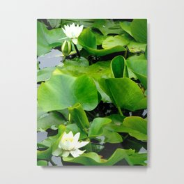 Waterlily #2 Metal Print