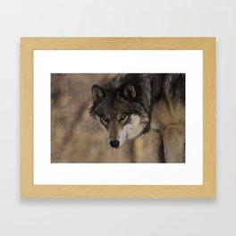 The Stalk Framed Art Print