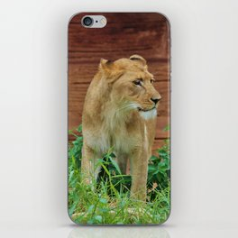 African Lioness iPhone Skin