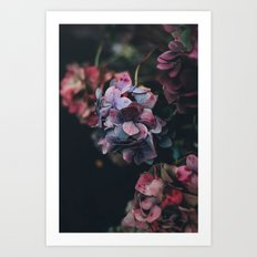 FLOWERS - FLORAL - PINK - RED - PHOTOGRAPHY Art Print