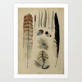 Naturalist Feathers Art Print