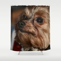 yorkie Shower Curtains featuring Eyes on Momma by IowaShots