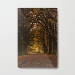 Covered Road Metal Print