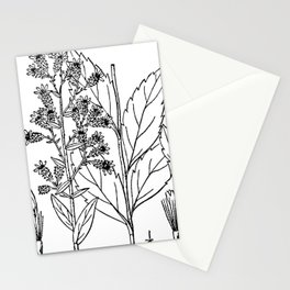 Botanical Scientific Illustration Black and White Stationery Cards