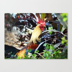 Colorful Cock Canvas Print