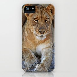 Young lion - Africa wildlife iPhone Case