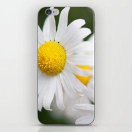 Daisy flowers iPhone Skin