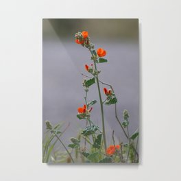 Desert Wildflower - 3 Metal Print