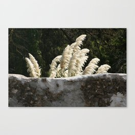 Flowering Pampas Grass Plumes Canvas Print