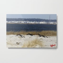 CANADIAN GEESE: the jersey shore Metal Print