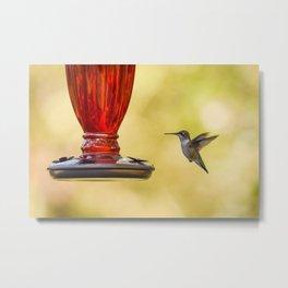 Hummingbird floating on golden air Metal Print
