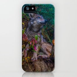 Wolf Pup in the Forest iPhone Case