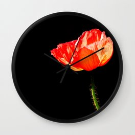 Red isolated Poppy flower, Fine Arts Natural Photography Wall Clock