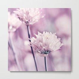 Allium pink macro 257 Metal Print