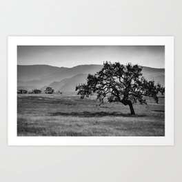 Lonely Tree in Black and White Art Print