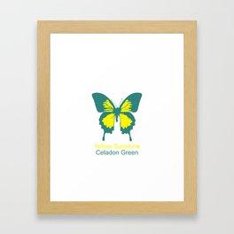Ulysses Butterfly 1 Framed Art Print