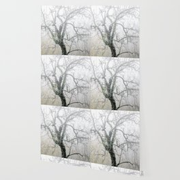 Naked tree surrounded by fog Wallpaper