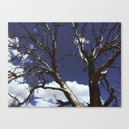 Bryce Canyon Backcountry Canvas Print