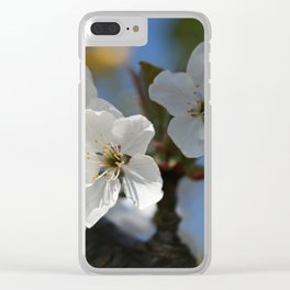 Close Up Of White Cherry Blossom Flowers Clear iPhone Case