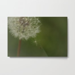 Wish or Weed? Metal Print
