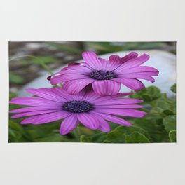 Purple and Pink African Daisy Flowers Rug