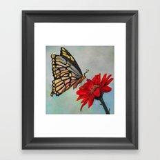 Swallowtail and Gerbera Square Framed Art Print