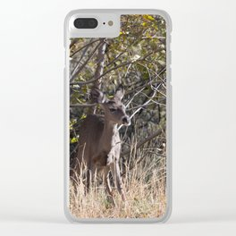Young deer in Tonto Natural Bridge State Park Clear iPhone Case