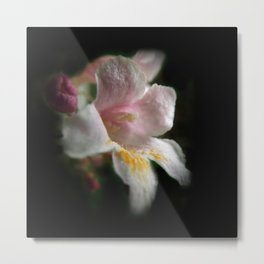 one apple blossom on black Metal Print