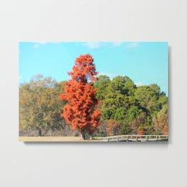 Cedar Tree Metal Print