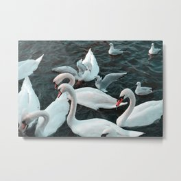 The Swans And Seagulls Metal Print