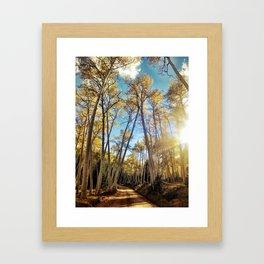 : aspens a glow : Framed Art Print