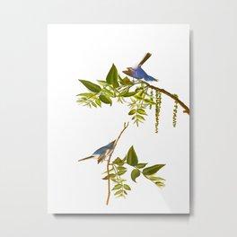 Blue Grey Flycatcher Bird Metal Print
