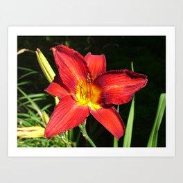 Flower Pic 11 Art Print