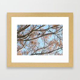 Rowan tree branches with berries and bird Framed Art Print