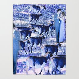 Dancing with Sheep Poster