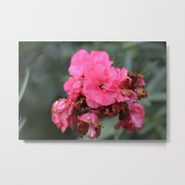 pink beatifl flower of the passion , passion flower , beaty in nature Metal Print