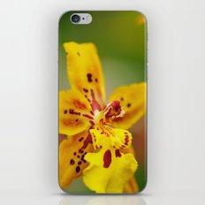 Reach for the Sun iPhone & iPod Skin