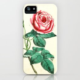 Vintage Rose Botanical lllustration iPhone Case