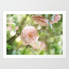 Pink and Green Camillia Art Print