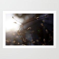 Winter Light Art Print