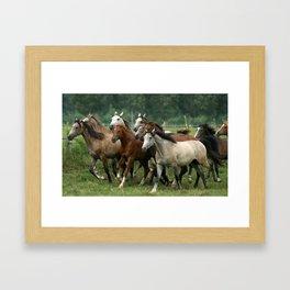 Arabian Horses Framed Art Print