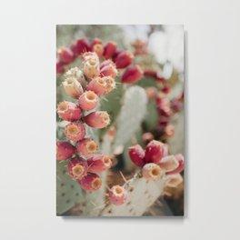 Cacti I Metal Print