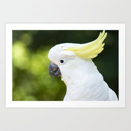 Yellow Crested Cockatoo Art Print