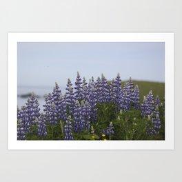 Lupine Flowers Photography Print Art Print