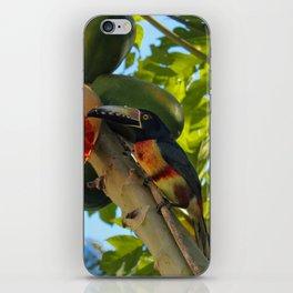 Toucanette and Papaya iPhone Skin